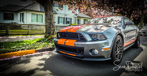 Shelby Ready | by Sean Daniel