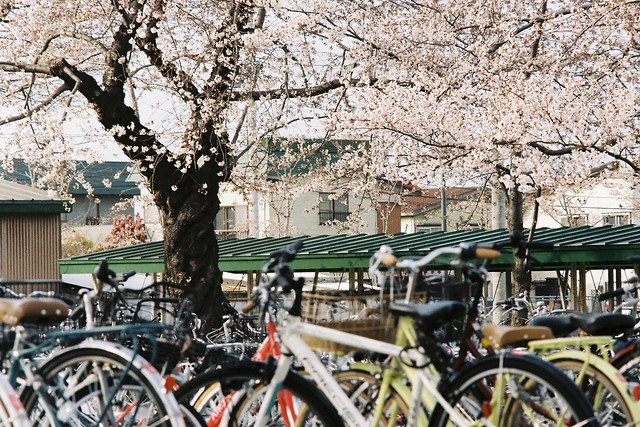 今年の桜10 MC TELE-ROKKOR-PE 200mm F4.5