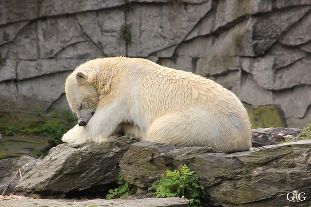 Besuch Tierpark Friedrichsfelde 17.04.172