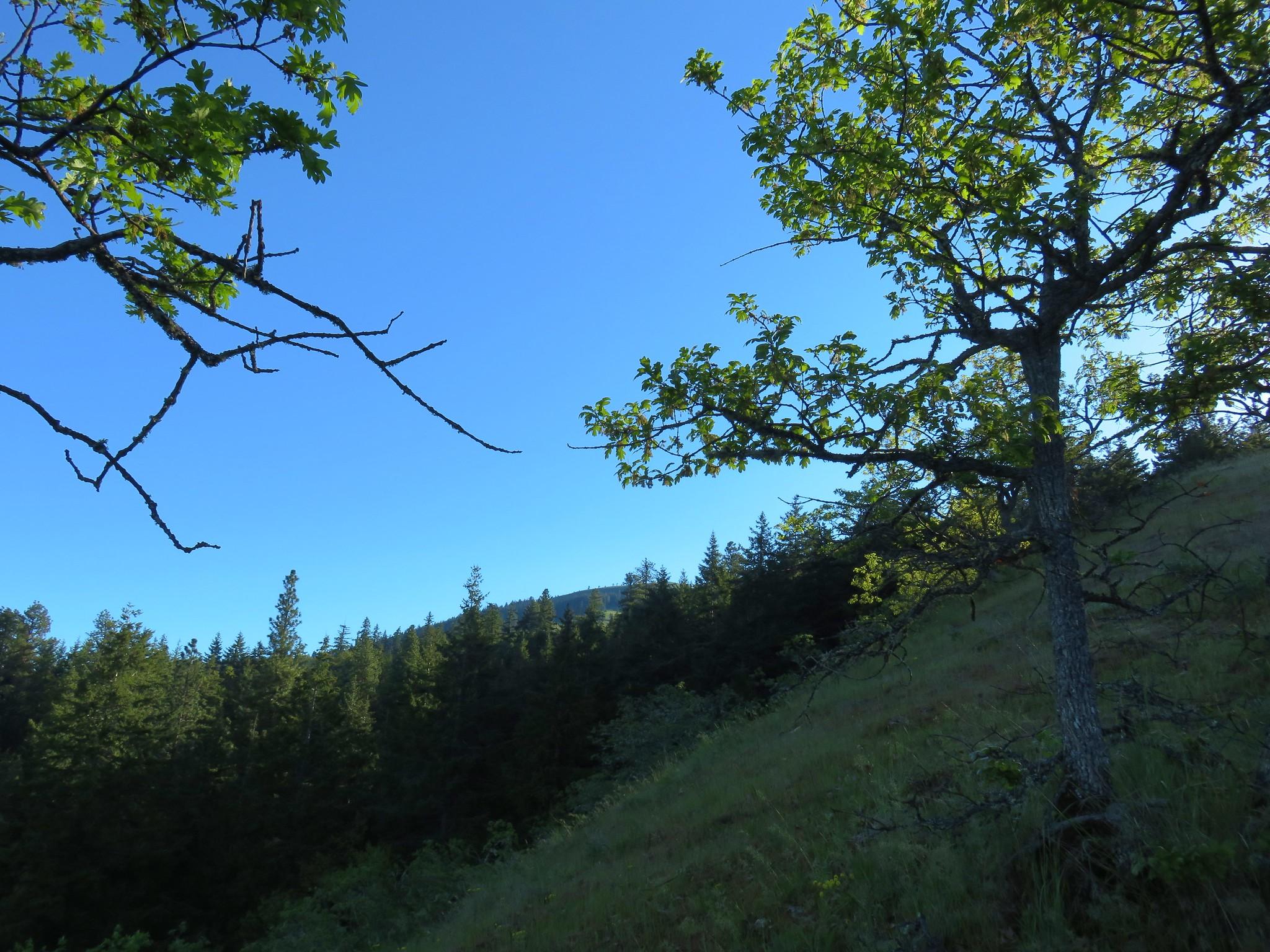 Balc Butte from the Oak Ridge Trail