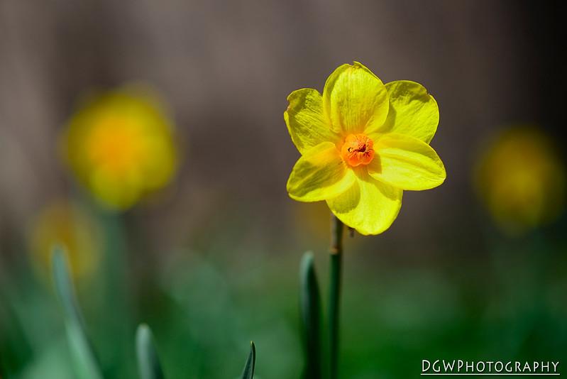 Flowery Bokeh