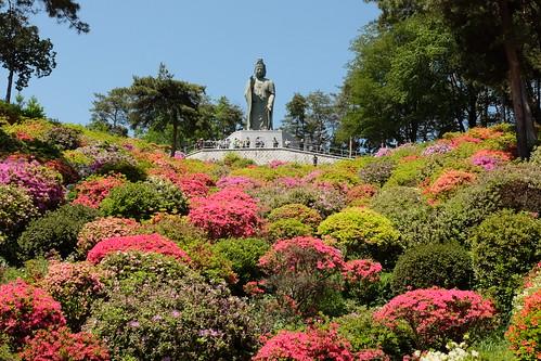 Shiofune Kannon temple Azalea Festival 2017 48