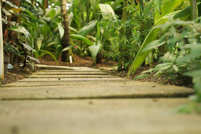 kasvitieteellinen  puutarha14