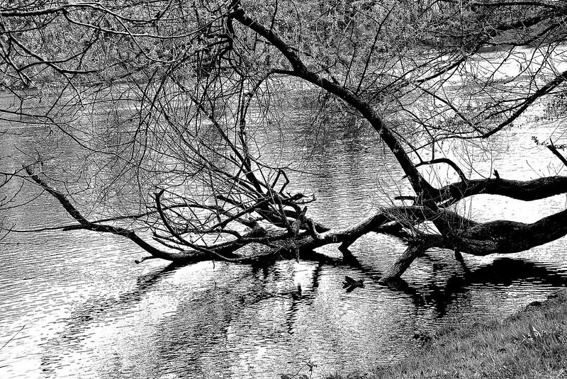 River Aar 31.03.2017