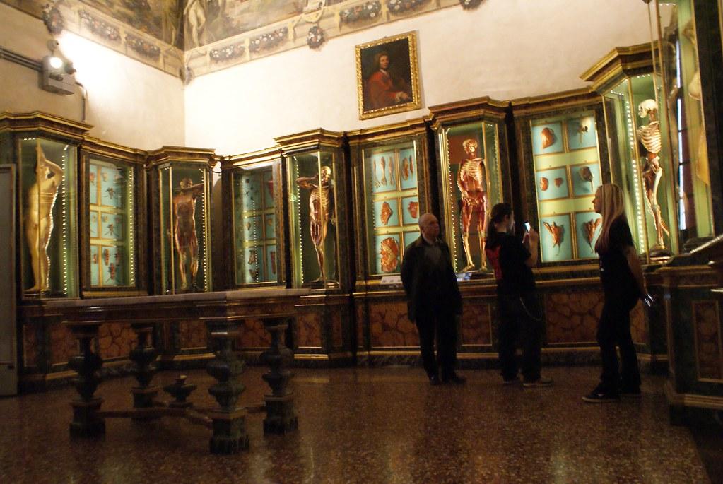 Collection d'anatomie du musée Poggi à Bologne : Plusieurs squelettes avec ou sans les muscles.