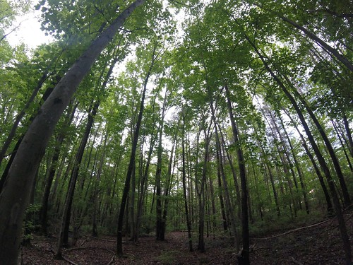 Forest Fisheye