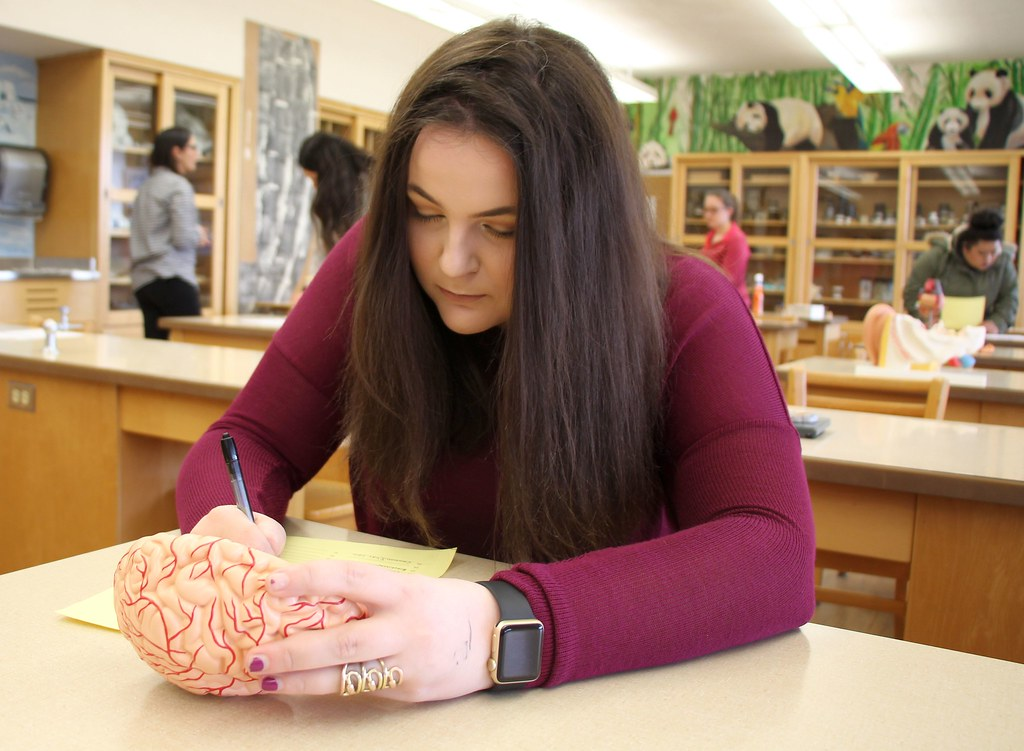 Human Anatomy and Physiology class, week of April 24, 2019… | Flickr