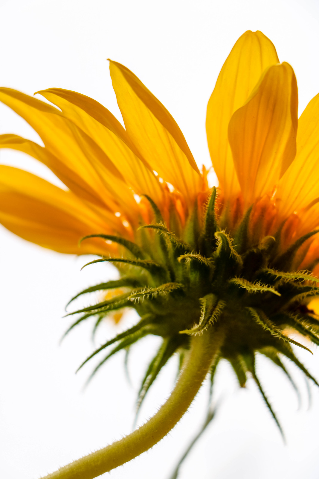 Macro Monday Smells Nice And Flowery