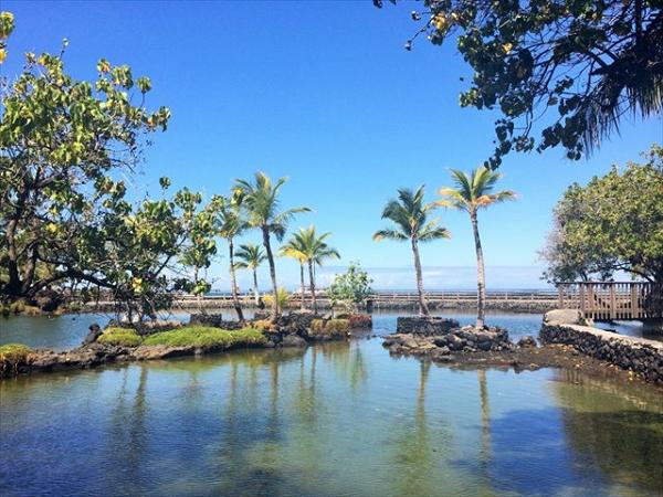 桑田佳祐がJTB新CMで撮影訪れたハワイ島「フィッシュポンド」を紹介!