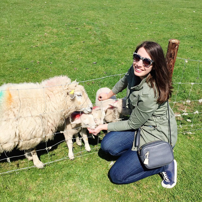 utility jacket + loft jeans + J.Crew gray crossbody purse; sheep in Ireland travel blog