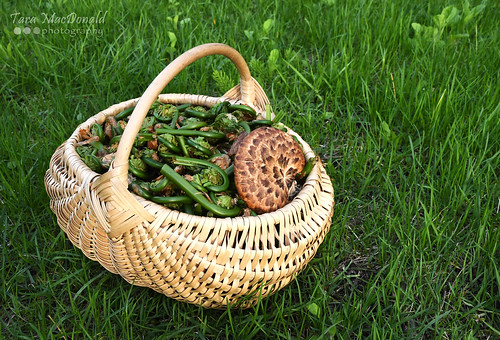 Fiddleheads & Pheasant's Back | by Tara MacDonald - www.TheVillagePlate.com