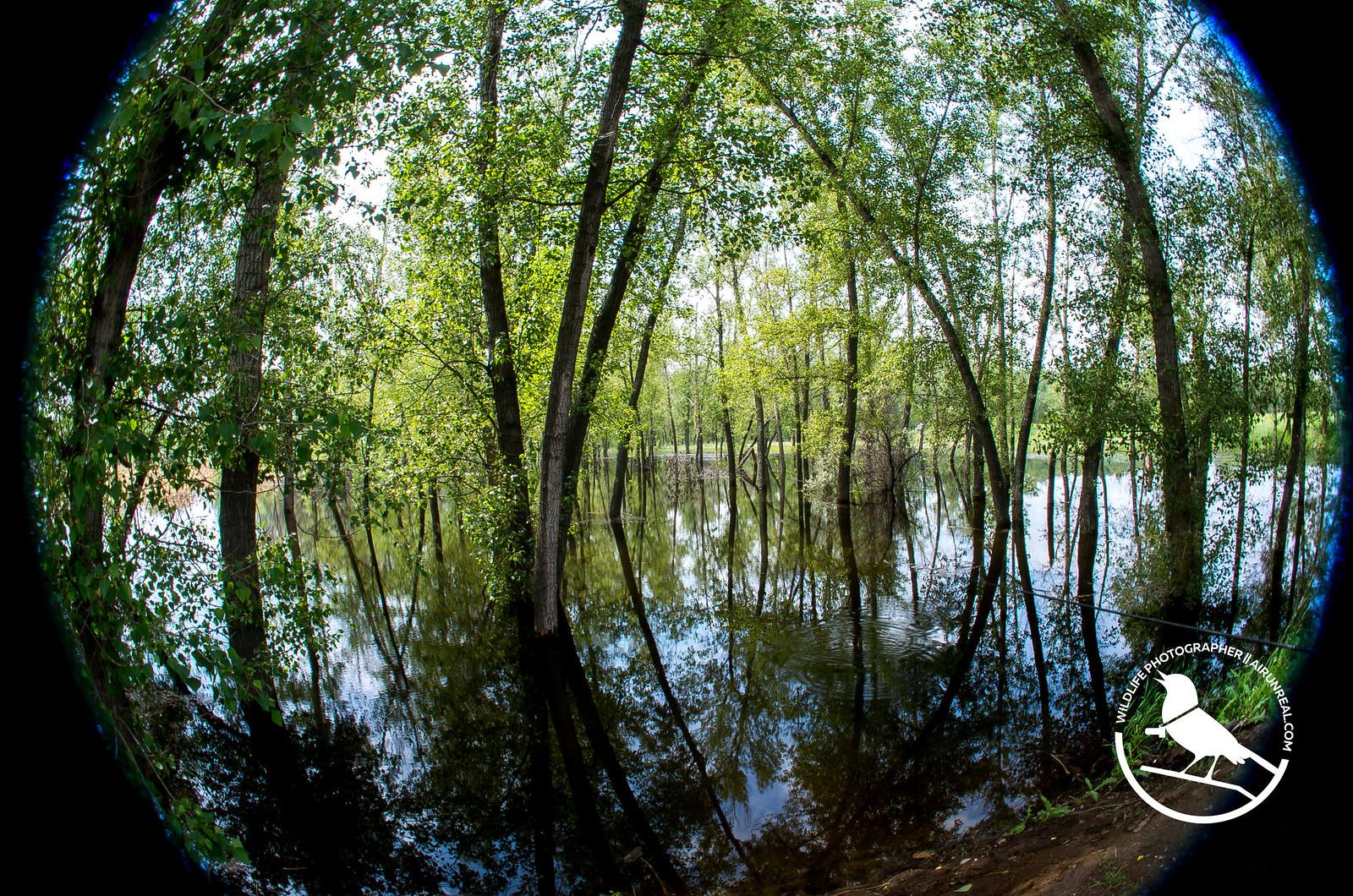 Ahtuba river spring // 22042017