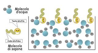 molecole di acqua e sapone