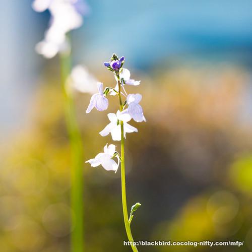 Flowers 20170428 #01