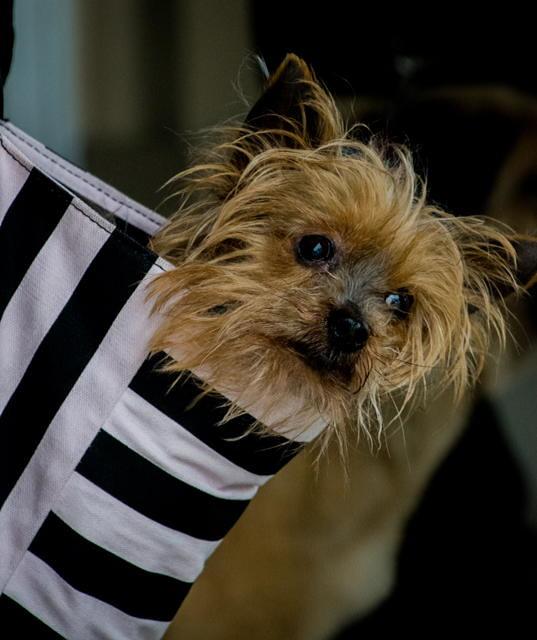 Benny's PET DEPOT Spring Adopt-a-Thon