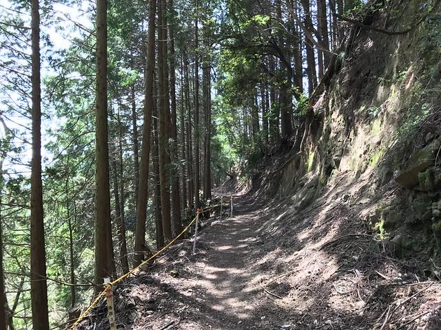 野登山 ミツマタの森ルート 林道 ロープ