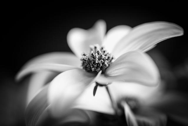 20170430 Flower