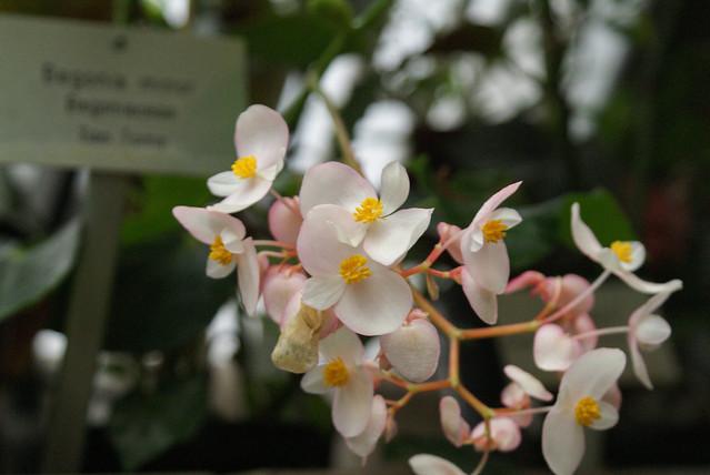 kasvitieteellinen puutarha 1