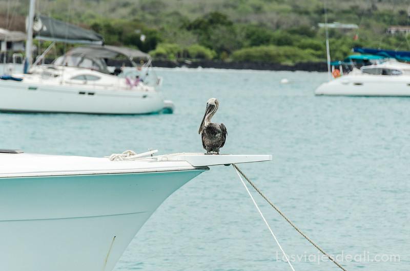 isla de Santa Cruz viajar por tu cuenta a Galápagos