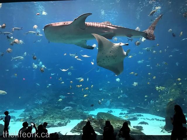 Atlanta_Aquarium4