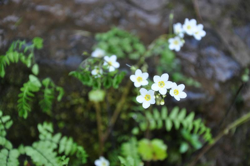 Spring Flowers @ Mt. Hope Chronicles