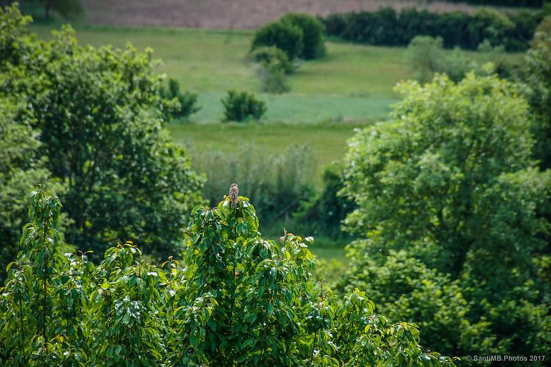 Gorrión posado en un árbol