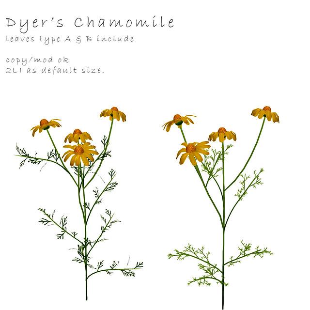 *NAMINOKE*Camomile flower