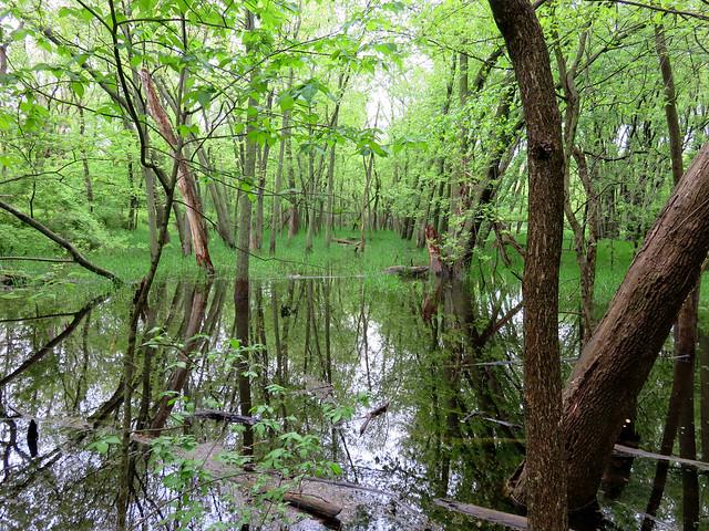Fox River flood plain 20170511