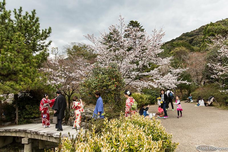 Maruyama-Park-Kioto-39