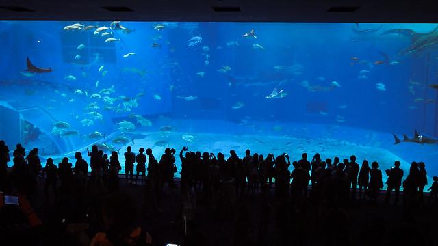 美麗海水族館 | 沖繩
