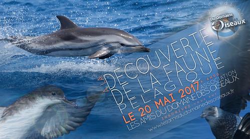 Sortie Associative - Faune pélagique de Méditerranée - 20 MAI 2017