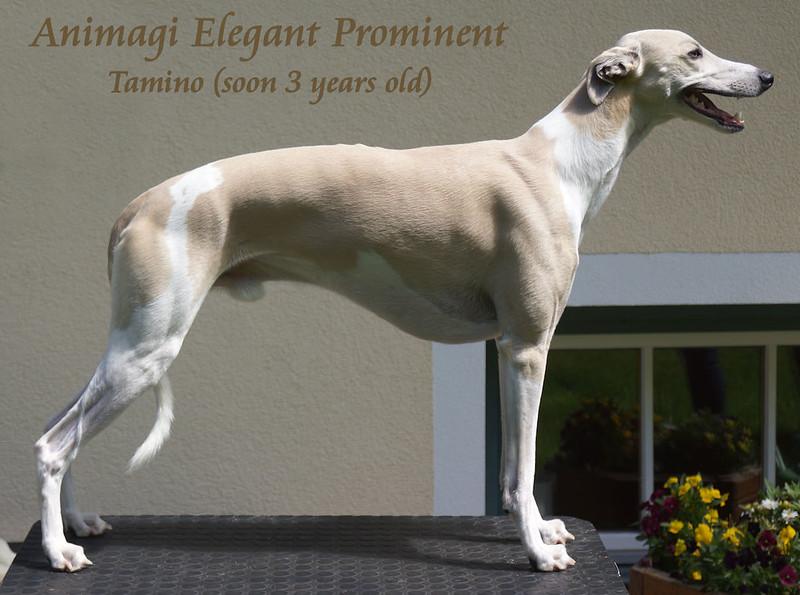 Tamino fast 3 Jahre alt, er hat sich toll entwickelt!