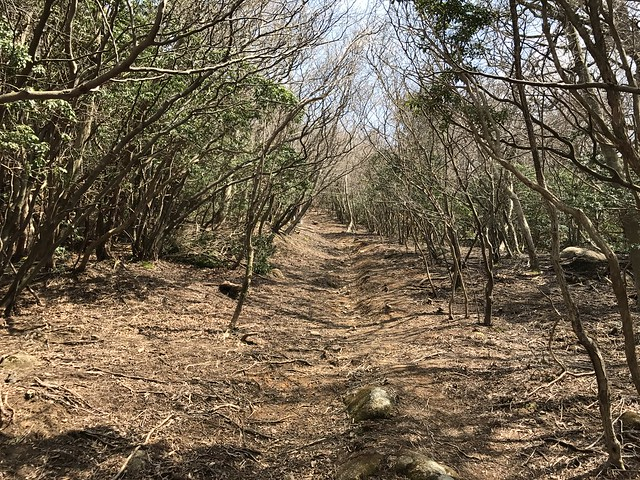 野登山 登山道
