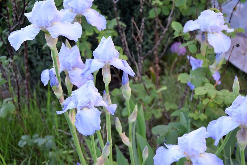 Iris 18.05 (2)