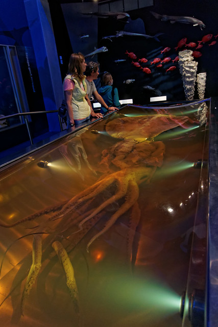 The Colossal Squid Exhibition