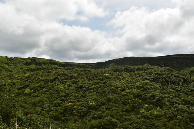八丈富士・中央火口丘の森林