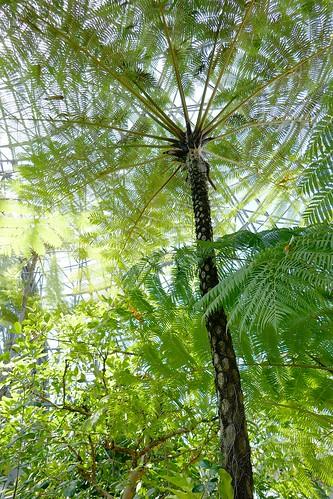 "Yumenoshima Tropical Greenhouse Dome_(2017_05_05)_5_resized_1 ""夢の島熱帯植物館"" のドームの中を撮影した写真。 高い天井に向かって熱帯植物が生い茂っている。"