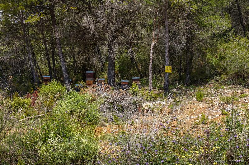 Explotación apícola cerca de Farena
