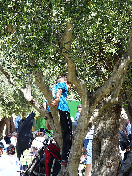 grimpette dans les oliviers