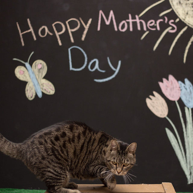 Mother's Day-5579
