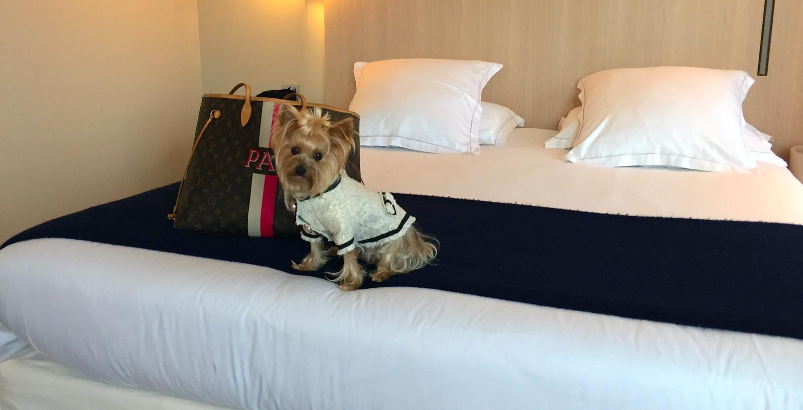 Viajar a Paris con Perro - Hotel de Nell Paris viajar a paris con perro - 34559999606 1fa44a2216 h - Viajar a Paris con perro