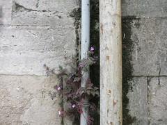 pipework garden