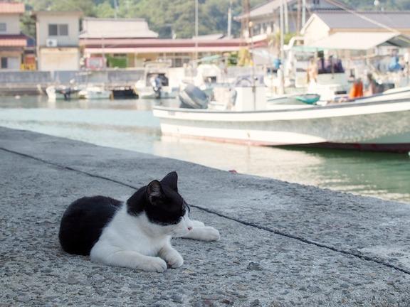 gatos-manabeshima