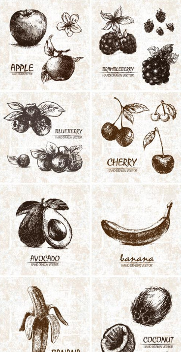 Hand drawn fruits drawn with a pencil fruit