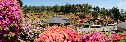 Shiofune Kannon temple Azalea Festival 2017 19