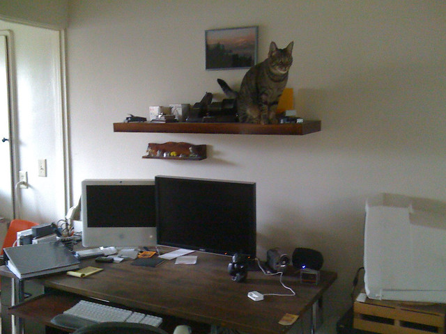 kitten on shelf