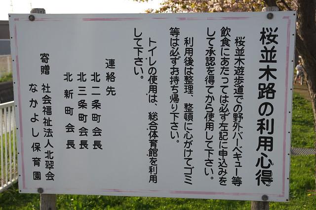 20170505岩見沢市の桜_02