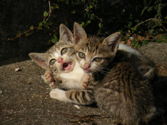 gatos aishima