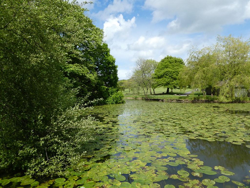 Lake Carter duck pond, Lancaster University