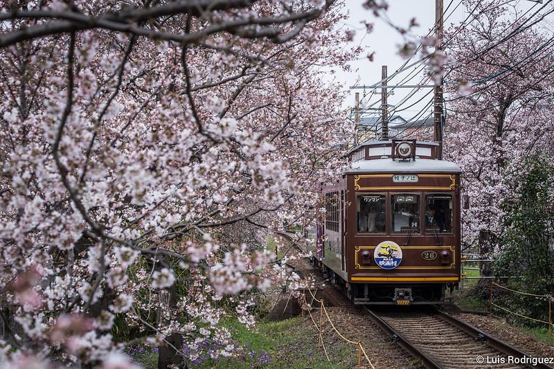 Túnel de cerezos del tranvía de Kioto